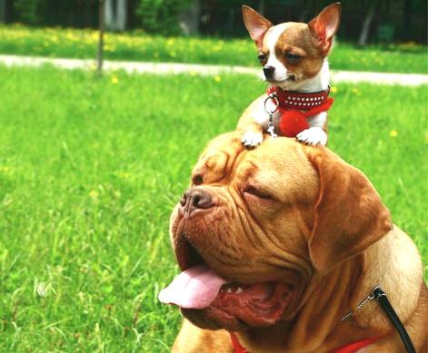 large dog or small dog