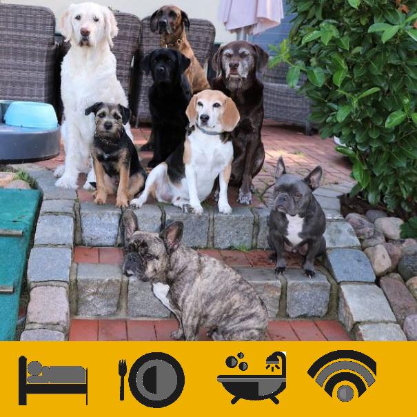 Hondenhotels diensten