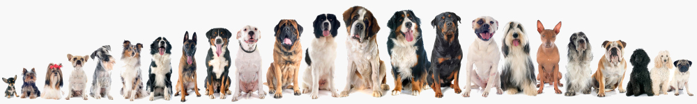 Tinberdog – The Online dog community. Everything for dogs.
